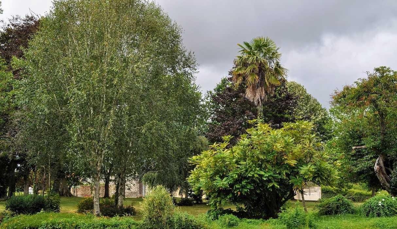 Le Petit-castel - Saint-Martin-des-Prés dsc0482